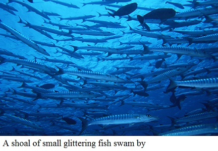 shoal of fish meaning